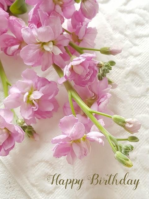 スマホカメラで春の花撮影&文字入れ(野の花さん)