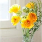 一眼レフカメラで春の花撮影(megu_hiroさん)