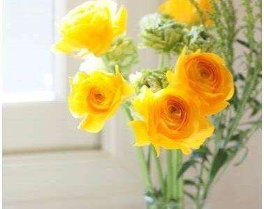一眼レフカメラで春の花&手書きふうフォントで文字入れ(定期レッスンクラス受講生:megu_hiroさん)