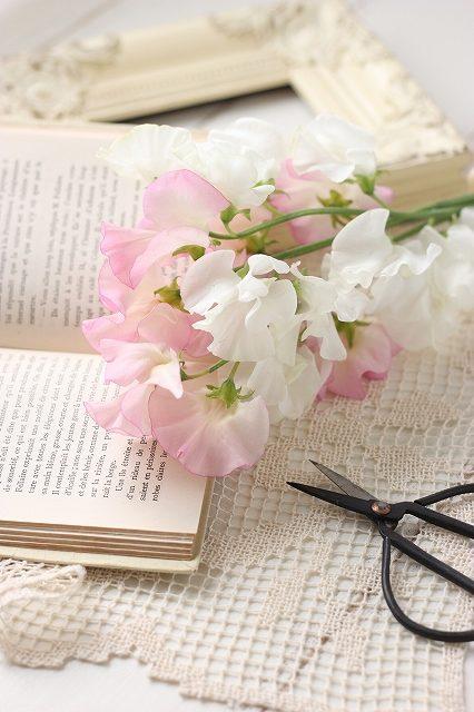 ピンクと白のスイートピー