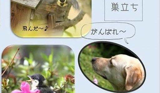 パワーポイントA4両面アルバム:庭でバードウォッチング(さくらさん)
